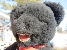 """VINTAGE ANTIQUE RARE 16"""" BLACK TEDDY BEAR OPEN MOUTH HARD COMP HEAD GERMANY ?"""