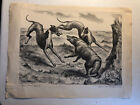 Hounds And Coyote John S Curry 1931 Print Rare Early Hunting Greyhound Depiction