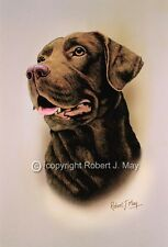 Chocolate Labrador Retriever Print by Robert J. May
