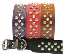 Leather Dog Pet Collar Staffy Bull Terrier Collar Studded - Australian Made