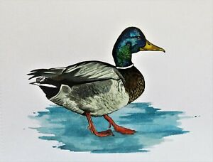 Original painting Art watercolour painting on watercolour paper Mallard (Duck)