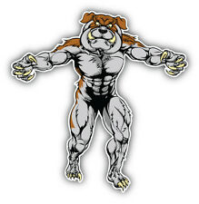 Muscular Bulldog Car Bumper Sticker Decal 5'' x 5''