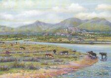 Porthmadog, Eifionydd area of Gwynedd Wales, Cows -- United Kingdom Art Postcard