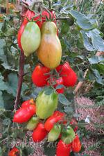 10 graines de tomate Renard Rouge charnue très productive savoureuse seeds m.bio