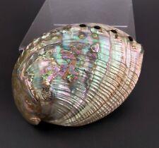 Vtg Mother of Pearl Sea Shell Beach Iridescent Abalone Decor Craft Art Nautical