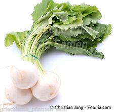 Radieschen WHITE HALESTONE * 100 Samen* Ernte nach 40 Tagen * Rettich*zart*Salat