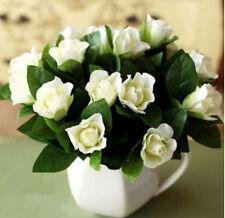 FD999 GARDENIA /CAPE JASMINE Jasminiodes White Shrub Aromatic Flower Seed 10pc:)
