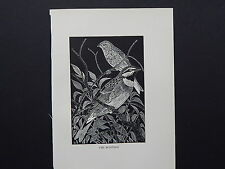 BIRDS, ERIC FITCH DAGLISH, Engraving, c. 1948 Cirl Buntings #45