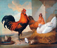 Domestic Cock Hens and Chicks A1+ by Francis Barlow Canvas Print