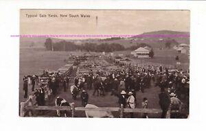 CATTLE AUCTION    NSW Sale Yards LIVE STOCK   Vintage postcard c.1910s AUSTRALIA