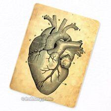 Heart #1 Deco Magnet, Decorative Fridge Antique Medical Illustration Anatomy