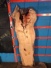 "#9922    1 11/16"" THICK   KILN DRIED spalted  box elder slab"