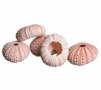 "Sea Urchin | Pink Sea Urchin Shells 1""-2"" | 5 Pack for Craft & Decor"