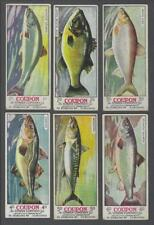 1920's Cowan's V10 Canadian Fish Trading Cards Near Set of 22/24