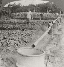 Keystone Stereoview Plantation,Cayenne, French Guiana From RARE 1200 Card Set T1