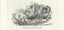 Stampa antica PIZARRA MALAGA raccolta limoni 1892 Old Print Grabado Antiguo