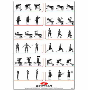 59149 Dumbbell Workout HQ Gym Fitness Exercises Wall Print POSTER AU