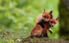 Fox Empowerment/Reiki totem animal/courage/focus/pdf manual on cd + bonus