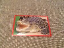 #175 Panini Dinosaurs Like Me sticker / unused