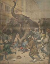 K0594 A Torino 5 elefanti creano panico alla popolazione - Stampa antica