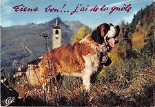 BF38629 st bernard   chien dog  animal animaux