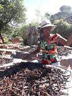 10 gousses de Vanille Bourbon 17/19 Madagascar 2020 = 40 gr  direct productrice
