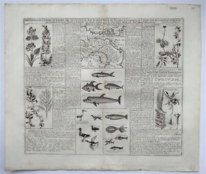 Original antique map of the Isthmus of Panama with local flora and fauna, c.1720