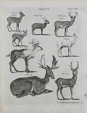 1797 2x Antique impresiones Stag Deer Roebuck Elk Moose etc. + 1797 Artículo Original