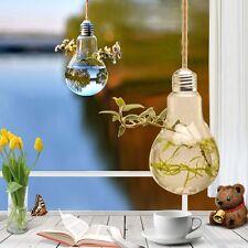 Wall Hang Glass Flower Plant Vase Terrarium Container Home Garden Ball Decor