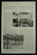 Bacon Curing Methods Countries Supplying British Market 1910 3 Page Article 6677