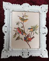 IMAGE avec cadres ancien blanc Peintures Oiseau Tableau mural animaux 45X38