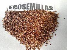 Monterrey, cipres california, Cupressus lambertiana, 200 semillas PAGA 2 ENVÍO 3