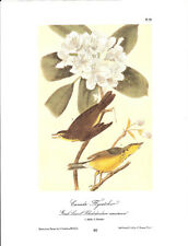 Canada Flycatcher Vintage Bird Print by John James Audubon