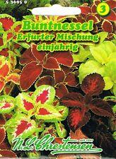 536950 Buntnessel Coleus blumei  Blumen Saatgut  Mischung Saatgut