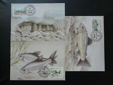 fresh water fish set of 3 maximum card Luxembourg 1998