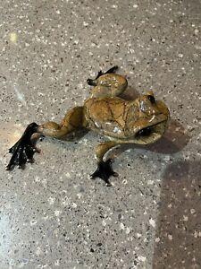 Tim Cotterill Frogman Toady Bronze Frog Sculpture
