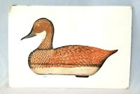 Vintage Pintail Hen Decoy Duck Aquatint Etching Arthur Nevin Signed & Numbered
