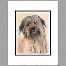 Pyrenean Shepherd Dog Original Art Print 8x10 Matted to 11x14