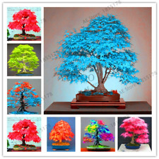Potted Plants Garden Japanese Maple Bonsai Tree Flores 20 Pcs Seeds New 2018 R I