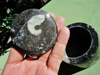 Polished AMMONITE Handcrafted Trinket Box Fossil Morocco 254g