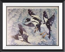 Goldeneye Ducks Vintage Print By Tunnicliffe Beautiful Birds Can Be Framed - P2