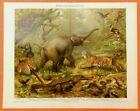Orientalische Fauna  Lithographie 1897 Elefant Tiger Orang Utan Biogegographie