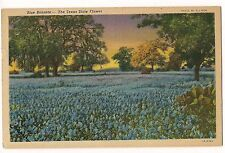 Blue Bonnets The Texas State Flower Field Tx Linen Postcard Free Ship 1955