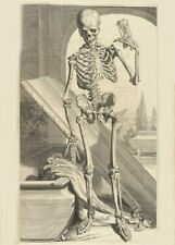 Skeleton Hand Right, De Humani Corporis, 1685, Govert Bidloo, Anatomy Poster