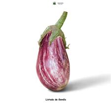 Berenjena listada de Gandía - 500 semillas - Saatgut - Graines - Semi - Seeds