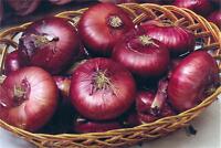 Onion Seeds Yalta. Vegetable Seed from Ukraine