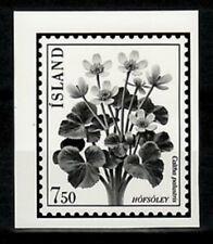 Photo Essay, Iceland Sc567 Flower, Caltha Palustris.