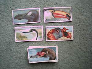 PLAYERS CIGARETTE CARDS CURIOUS BEAKS (BIRDS) 1929 SET VGC