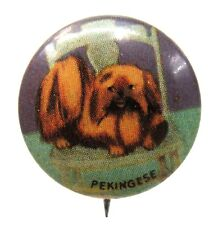 1930's PEKINGESE Dog tin litho pinback button