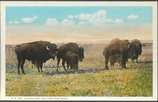 Postcard - Buffalo at Yellowstone.  Unposted.  Asahel Curtis N. Pacific